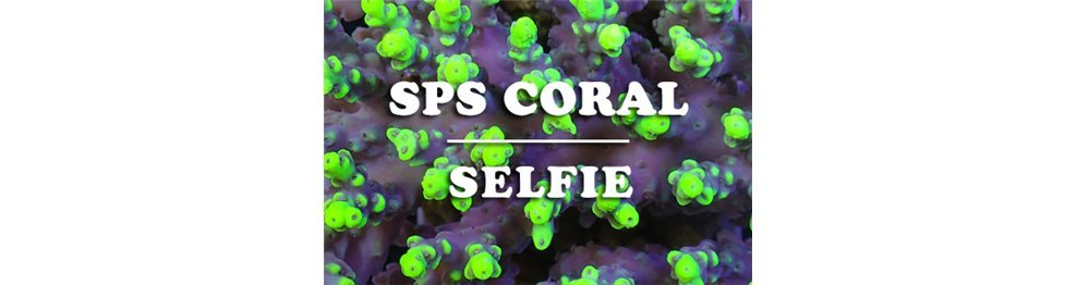 SPS Corals (WYSIWYG)