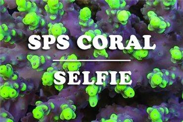 Coraux SPS (WYSIWYG)