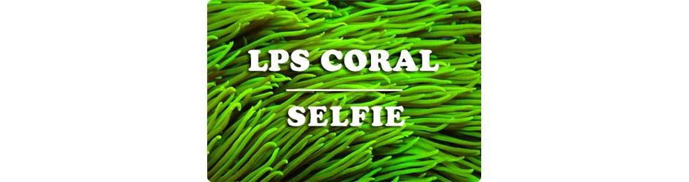 Coralli LPS (WYSIWYG)