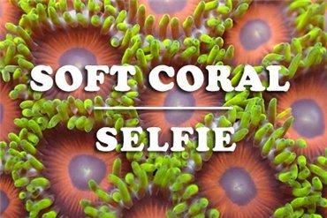 Corales Blandos (WYSIWYG)