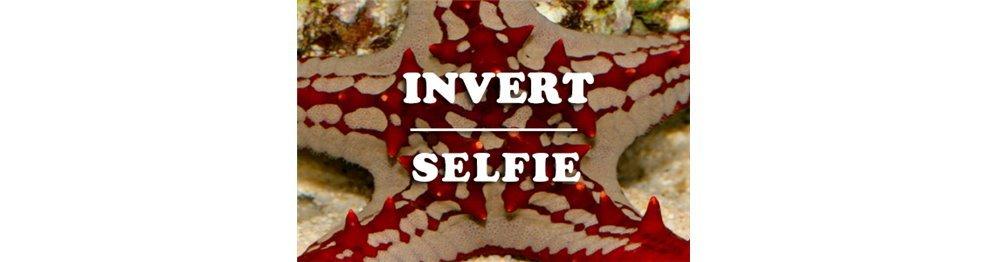 Invertebrados (WYSIWYG)