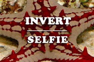 Invertebrates (WYSIWYG)
