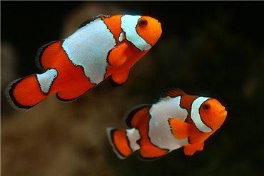 Meeresfische (WYSIWYG)