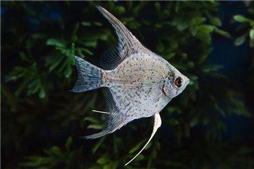 Freshwater Fishes (WYSIWYG)