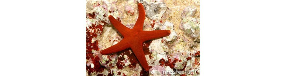 Echinoderms and Worms